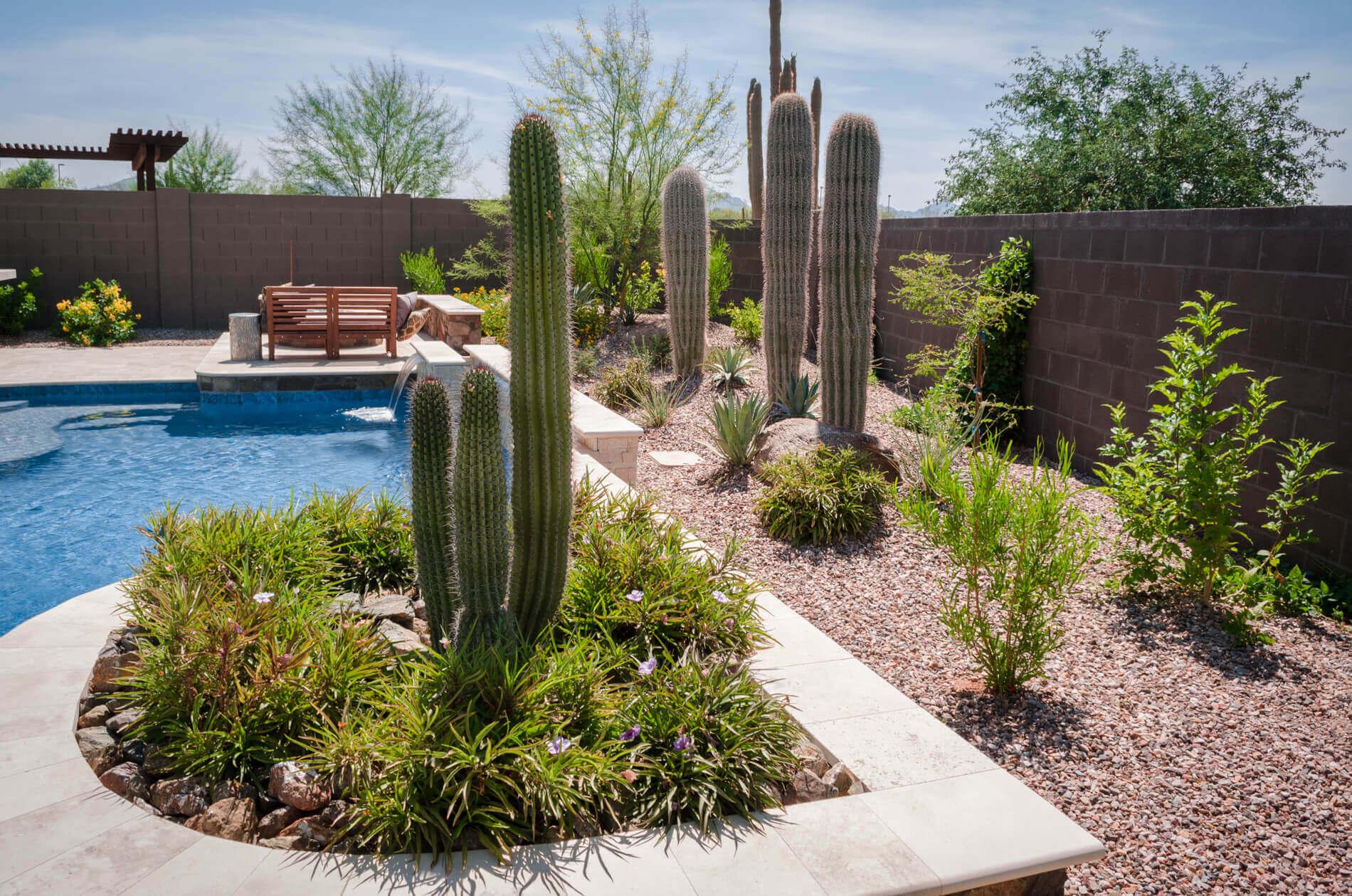 desert garden beds